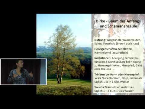 1/5: Margret Madejsky: Heilige Bäume - Heilende Bäume