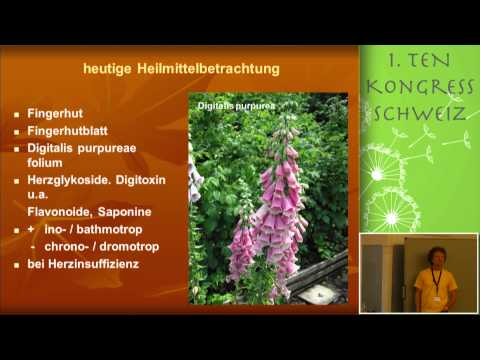 1/2: Christian Raimann: Humorale Qualitäten von Herz-Kreislaufpflanzen - eine praktische Betrachtung