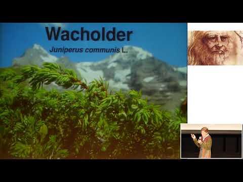 1/2: Dr. med. Marianne Ruoff: Wacholder - Wächterbaum und Ahnenpflanze